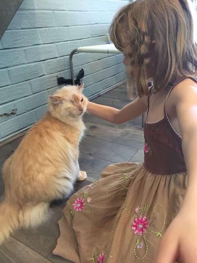 девочка гладит кота