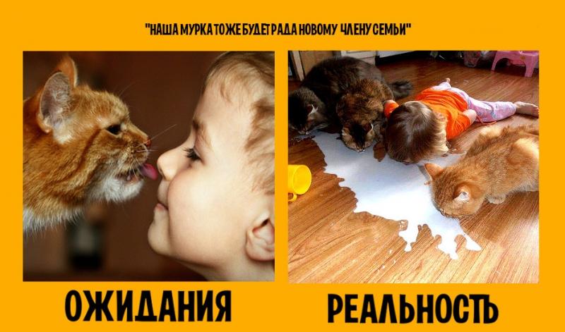 http://mtdata.ru/u27/photo4D10/20434400058-0/original.jpg#20434400058