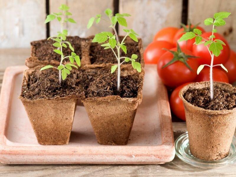 Главные подкормки для рассады огород