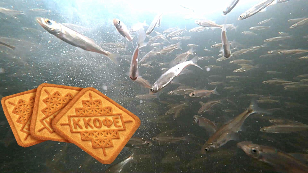 От этих печений рыба сходит с ума!