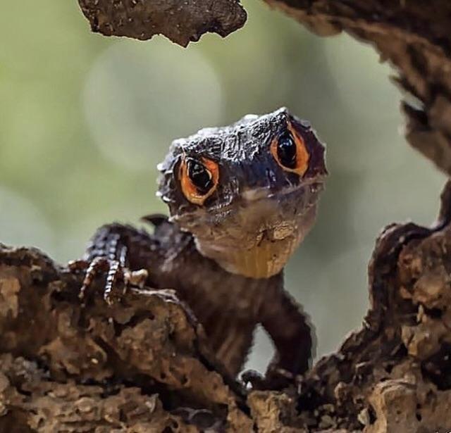 17. Оранжевоглазый дракон смотрит прямо в душу в мире, животные, красота, природа, удивительно, фото