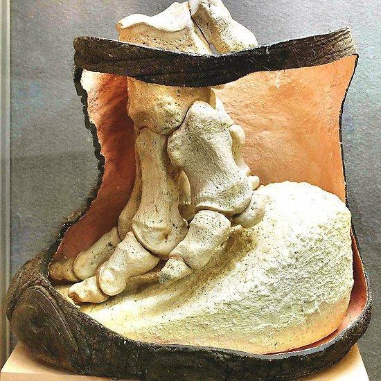 Нога слона животные, занимательно, интересно, необычно, природа, ракурс, факты