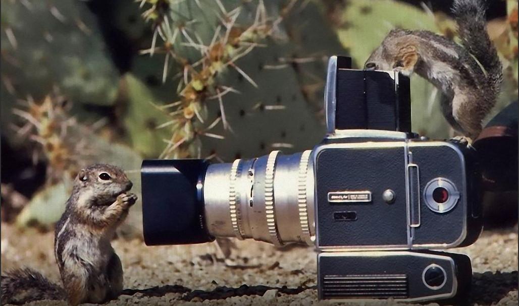 картинки прикольные с фотоаппаратами защищает