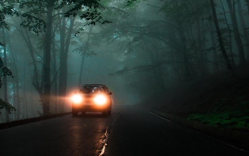 Почему олени не могут двигаться, когда на них попадает свет фар автомобиля