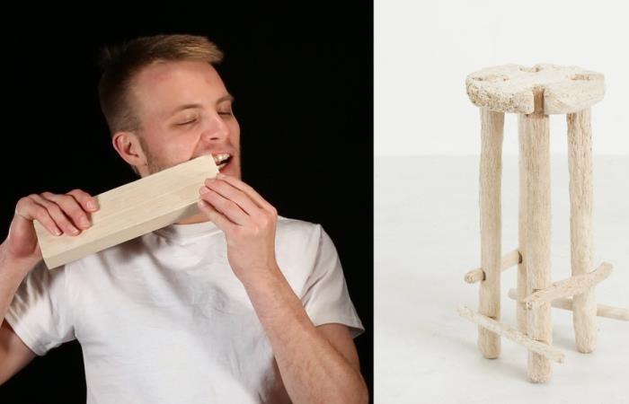 Человек-бобер: парень сделал табуретку, используя зубы вместо инструментов