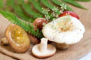 Витамины, цинк и много токсинов. Вред и польза лесных грибов