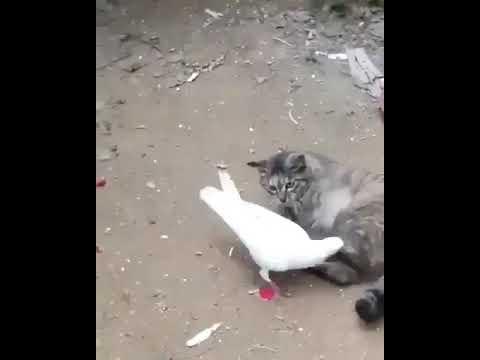 Опасная дружба