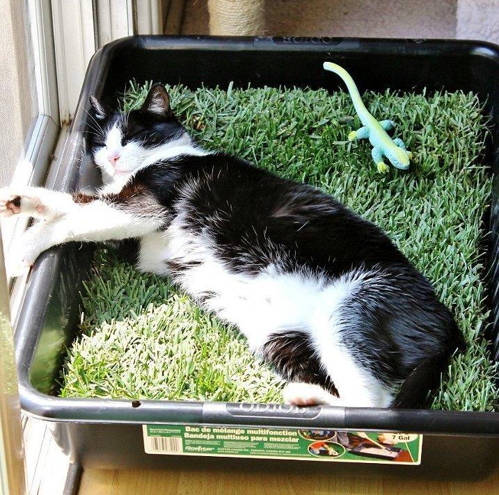 травка, чтобы поваляться игрушки для животных, коты, собаки