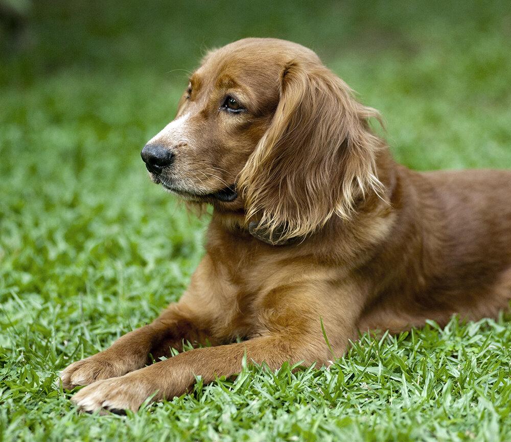 У меня есть фото той собаки, но качество так себе, поэтому нашла очень похожую на стоках.