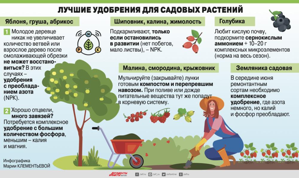 Селитра, зола или мочевина? Чем и когда надо удобрять летом растения удобрением, подкормите, кочан, высадки, раствором, когда, урастений, половине, подкармливать, подкормить, Вэтом, только, рассады, комплексным, намного, после, Овощные, краешки, листьев, калия