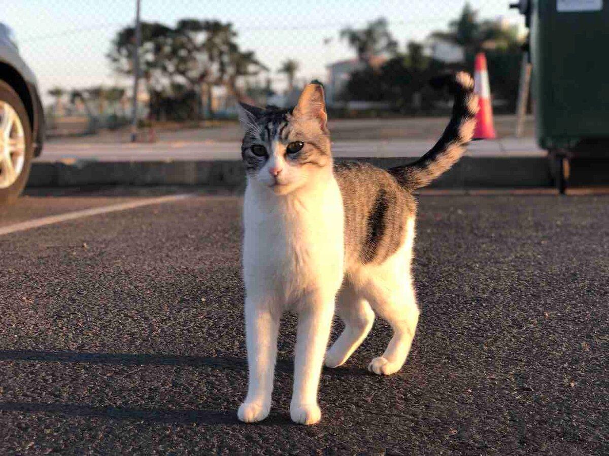 Одинокий кот на заправке. Его оставили или просто забыли