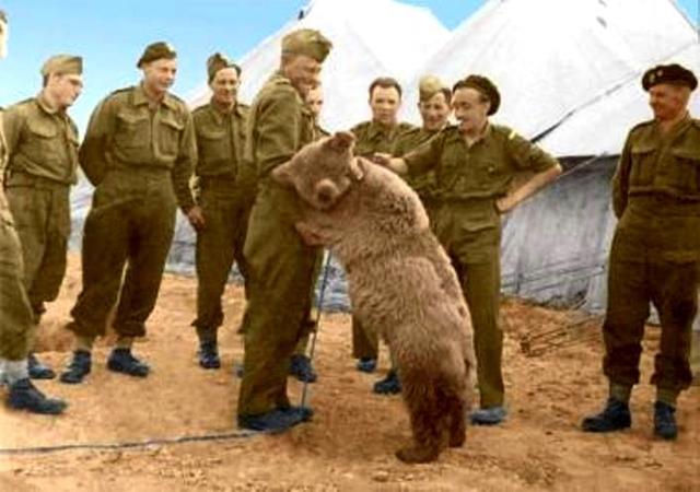 Войтек: боевой медведь, который воевал с фашистами