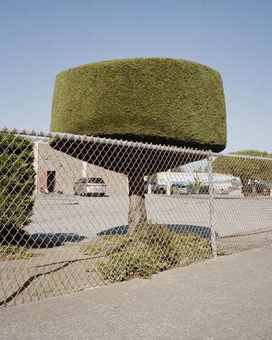 Битва домов и растений в Калифорнии