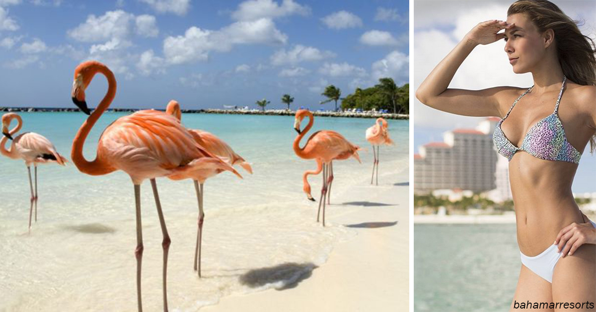 Курорт на Багамах будет плат…