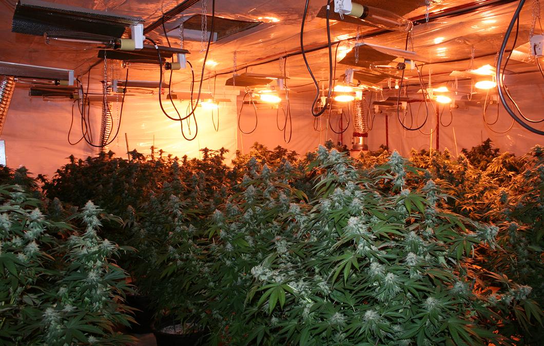 Как выращивать коноплю в дома марихуаны 2 грамма
