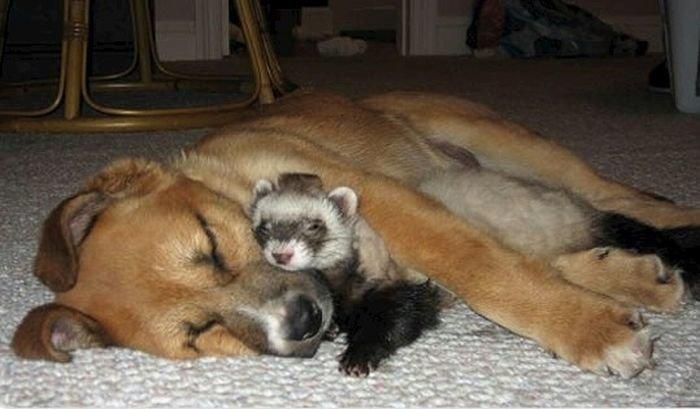 Эти забавные, любопытные и любвеобильные животные дружба, животные, игра