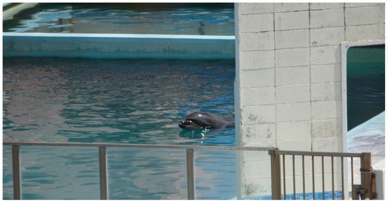 Дельфина и других животных бросили в закрывшемся японском морском парке в мире, видео, дельфин, животные, заброшенное, япония