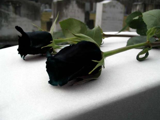 Существуют сказочно красивые чёрные розы