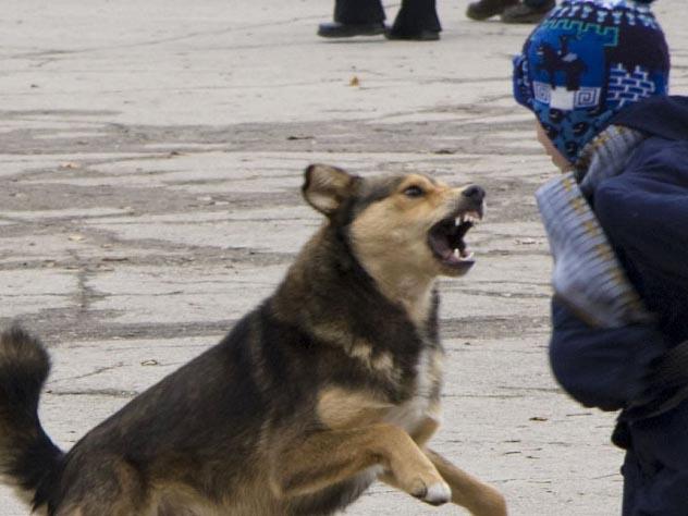 Бездомные псы снова напали на ребенка в Дагестане