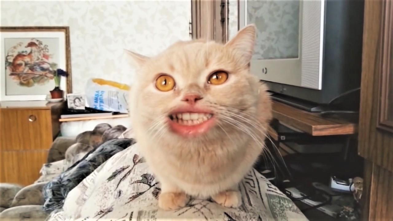 Привет! Я кот.( Песня кота )