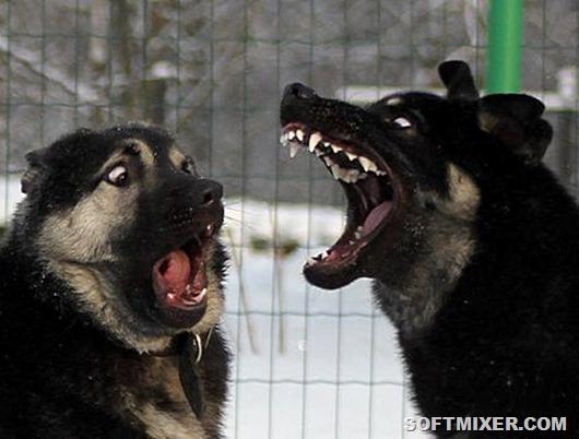Мстят ли животные? животные,интересное,коты,собаки