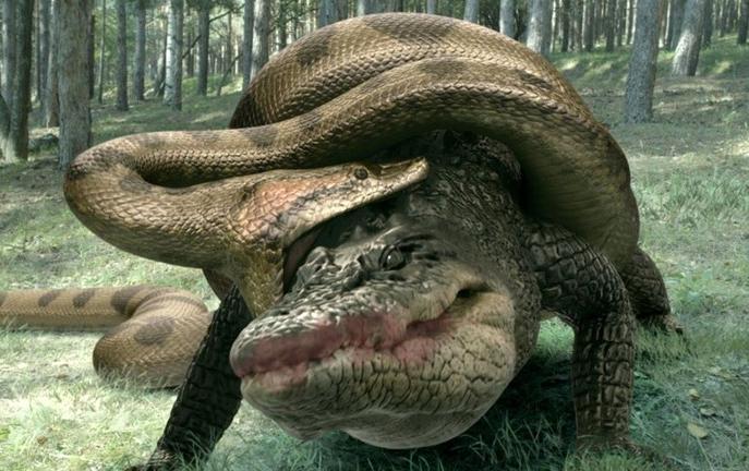 Битва титанов — анаконда против крокодила