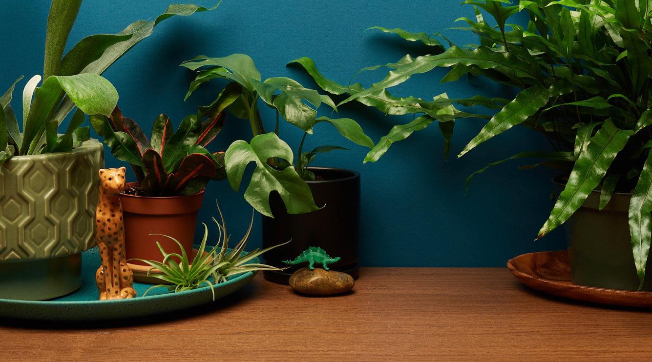Растения видят лучше нас. А почему? наука,познавательно,природа,растения