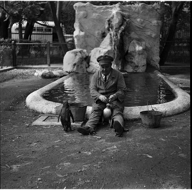 Тело, свет, отражение. Легенда аргентинской фотографии Аннемари Генрих  47