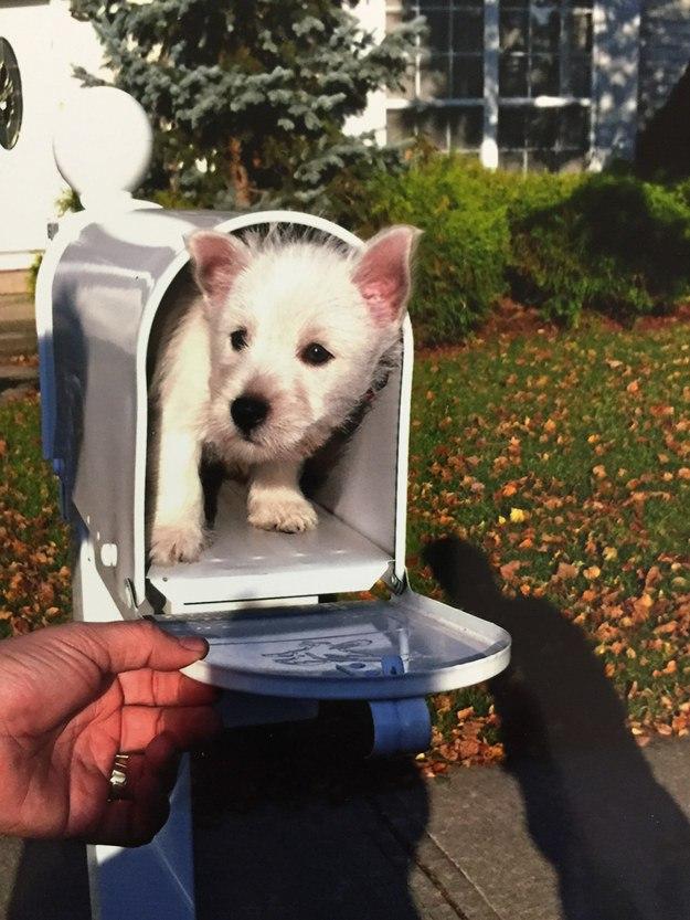 самые милые щеночки в мире (20)