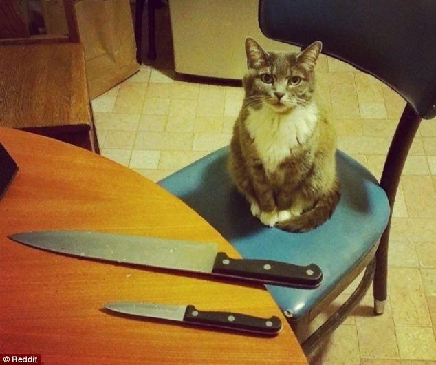 Коты, которые явно задумали что-то нехорошее