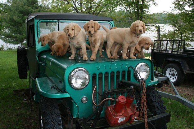 самые милые щеночки в мире (24)