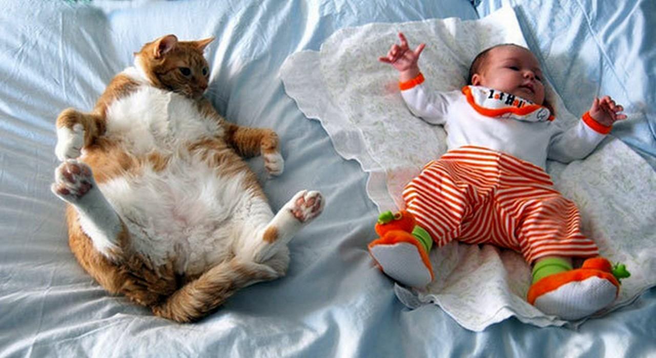 Очень смешные малыши и прикольные коты