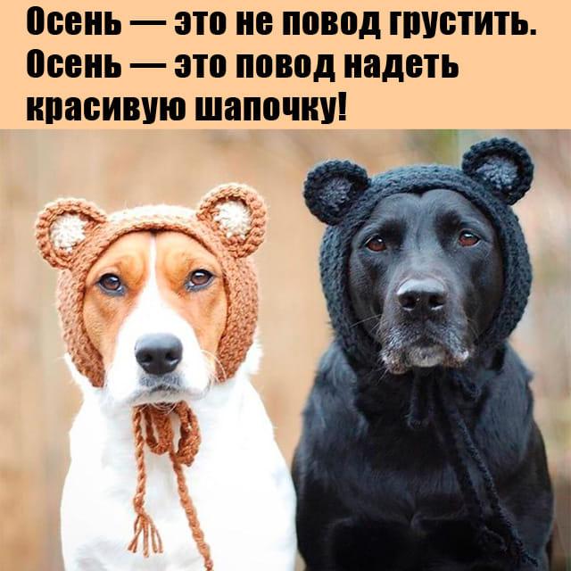 Бабушка и Ацкий Сoтoнa анекдоты,веселые картинки,Истории из жизни,Смешные животные,юмор