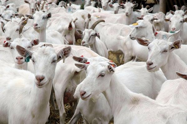 сельское хозяйство что выгодно выращивать из животных