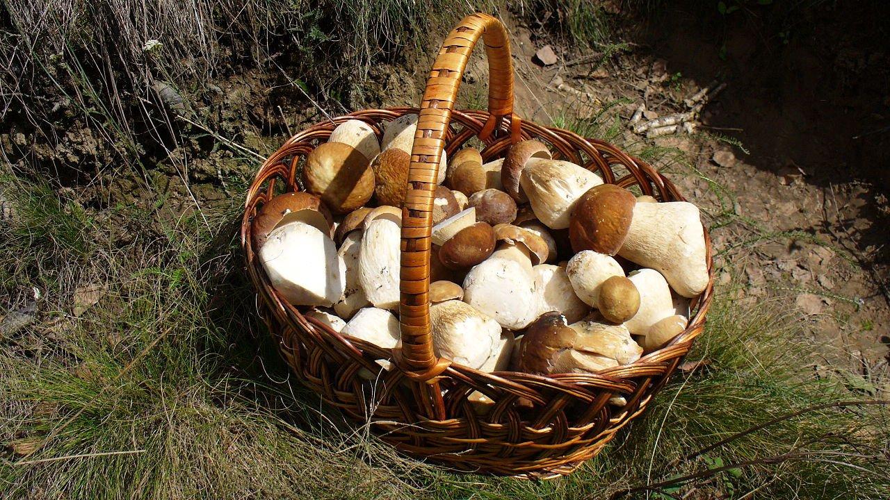 В России могут появиться пункты приема грибов и ягод
