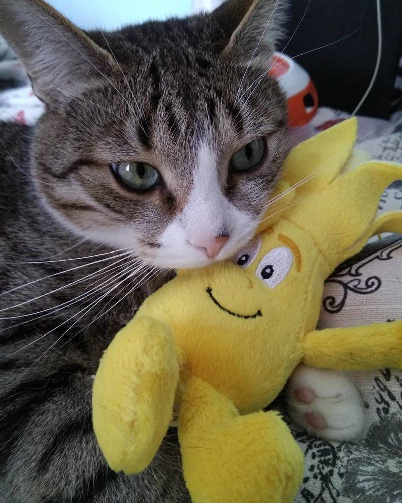 игрушки детей - особая любовь игрушки для животных, коты, собаки