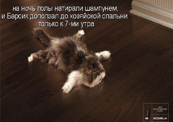 Котоматрицы умилительнейшие для услады глаз! Всем добра и любимого кота!!!