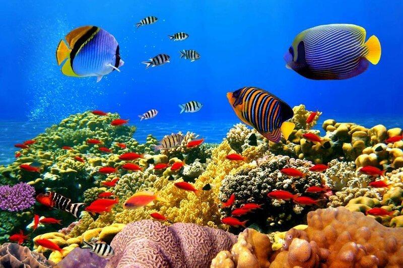 ЮНЕСКО Большой Барьерный риф, австралия, интересное, континент, природа, факты