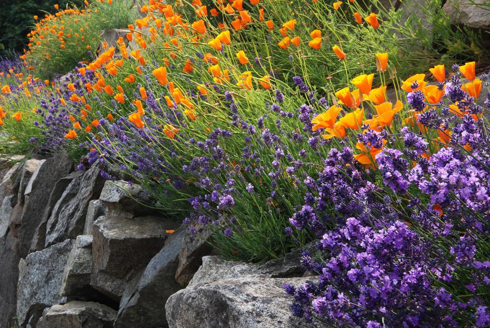 Устройство цветочной стенки