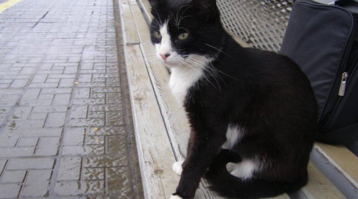 Кот-Хатико два месяца ждёт хозяина на приморском вокзале