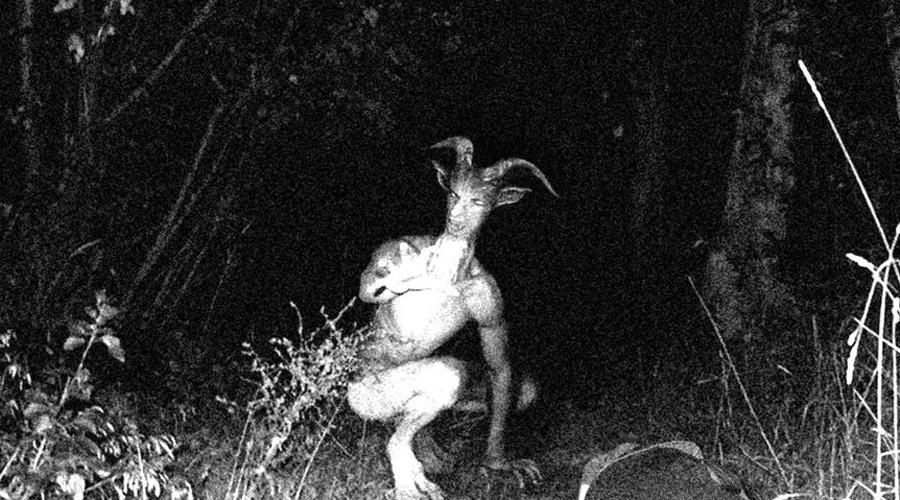 Ужасающие неизвестные науке создания