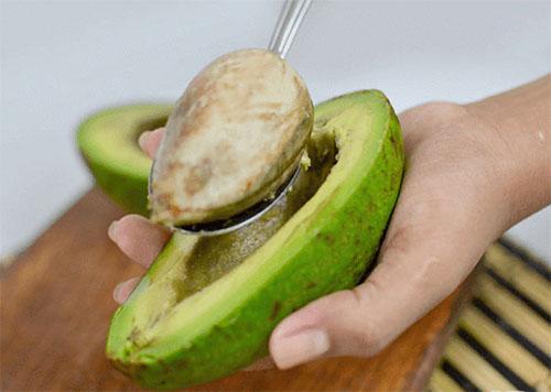Как вырастить дерево авокадо в домашних условиях из косточки комнатные растения,полезные советы