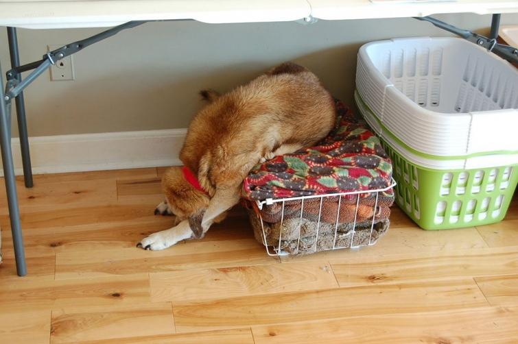 27 смешных собак, которые нашли себе занятие, пока хозяина нет дома