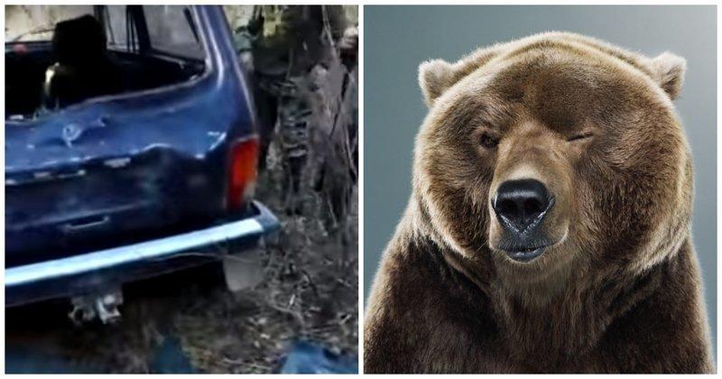 Медведь превратил в консервную банку автомобиль охотников, пока они выслеживали кабана