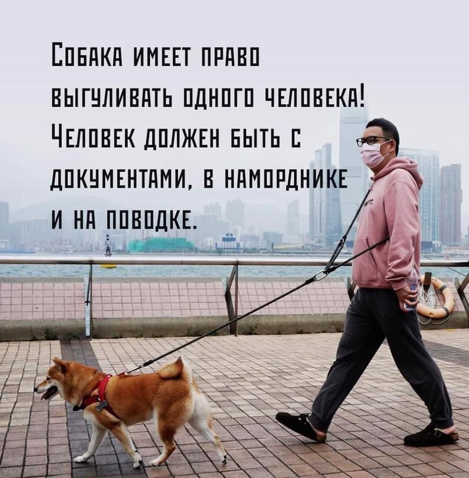«Талон на выход из подъезда и разрешение ходить…»