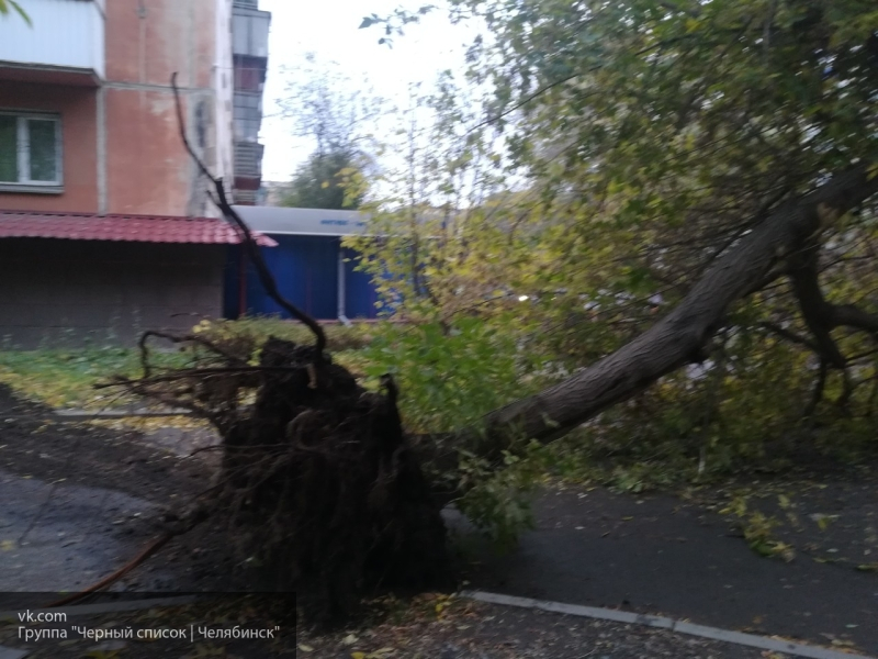 В Челябинске мусоровоз вырвал с корнем дерево и протащил его несколько метров