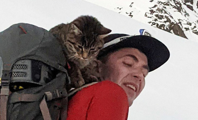 Альпинисты шли к вершине и нашли потерявшуюся кошку. Она шла с ними 3000 метров вверх, чтобы найти дом