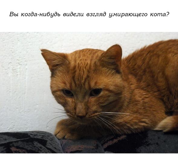 История одного доброго кота...