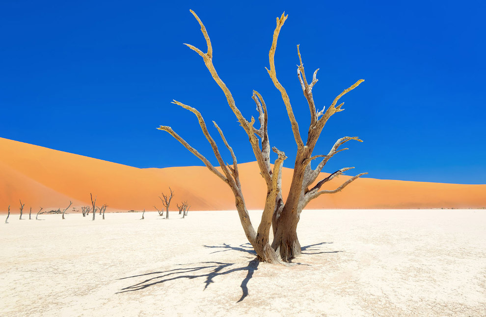 Мертвой долиной с остовами мертвых деревьев