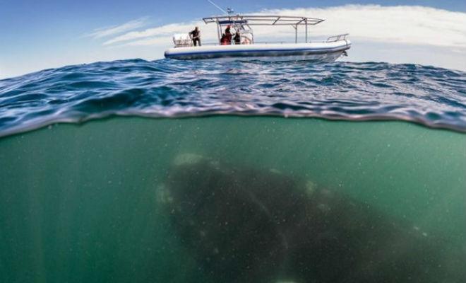 Моряки рассказали о самых необъяснимых встречах в открытом океане